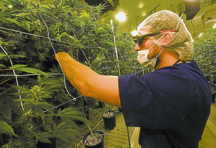 Uruguay empieza el miércoles a vender marihuana en farmacias
