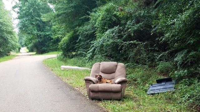Cachorro es abandonado en un sillon; espera por dias a sus duenos