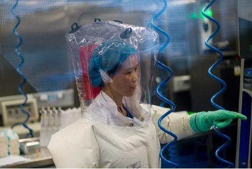 Laboratorio chino admite que estudiaba cepas vivas de coronavirus