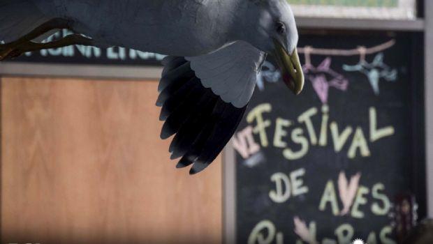 Continúa la sexta edición del Festival de Aves Playeras