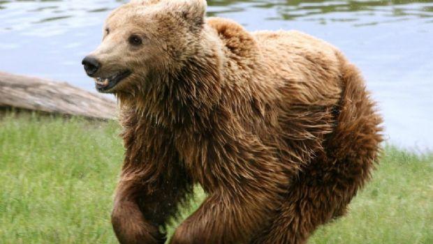 """Perrito defendió su casa de """"temibles"""" osos"""