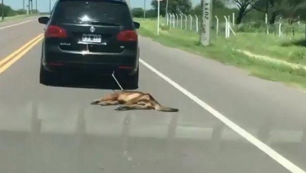 Video: ató a su perro al auto y lo arrastró por varios kilómetros