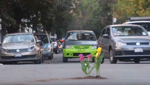 Siembran flores en los baches de la Ciudad de México para hacerlos visibles