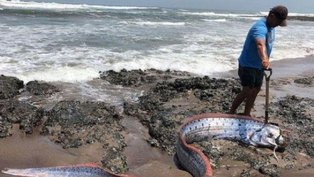 Alarma en Chile por aparición de monstruoso pez que predice terremotos