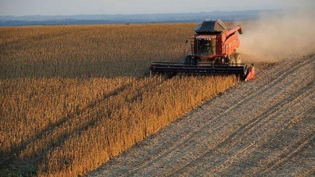 Otro impacto para la Argentina: el precio de la soja se derrumbó a nivel global