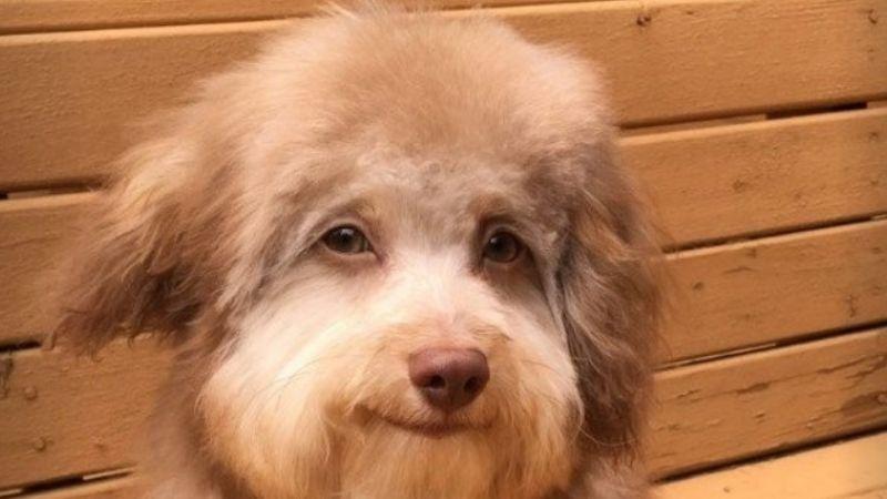 """Furor en las redes por """"Nori"""", el perro con mirada de joven apuesto"""
