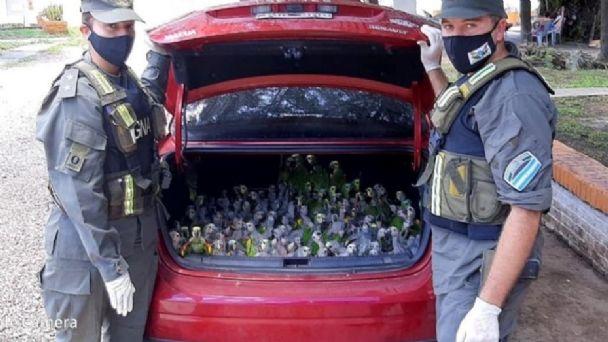 Llevaban 216 loros habladores de contrabando en el baúl del auto   El  Diario Nuevo Dia